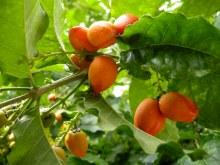 Jungle Fruits_02